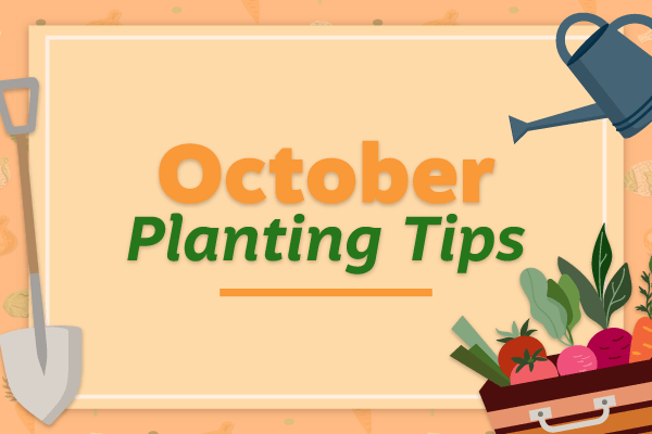 October Planting Tips