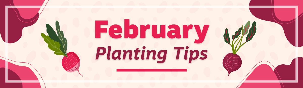 February 2020 Planting Tips