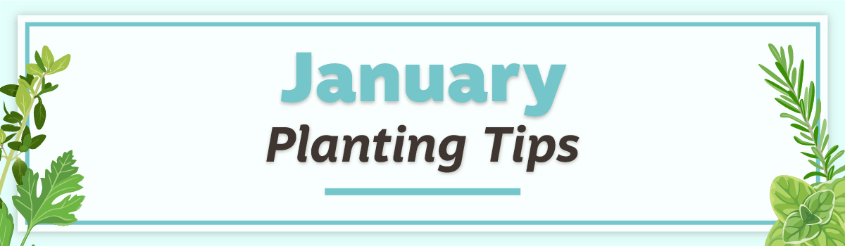January 2020 Planting Tips