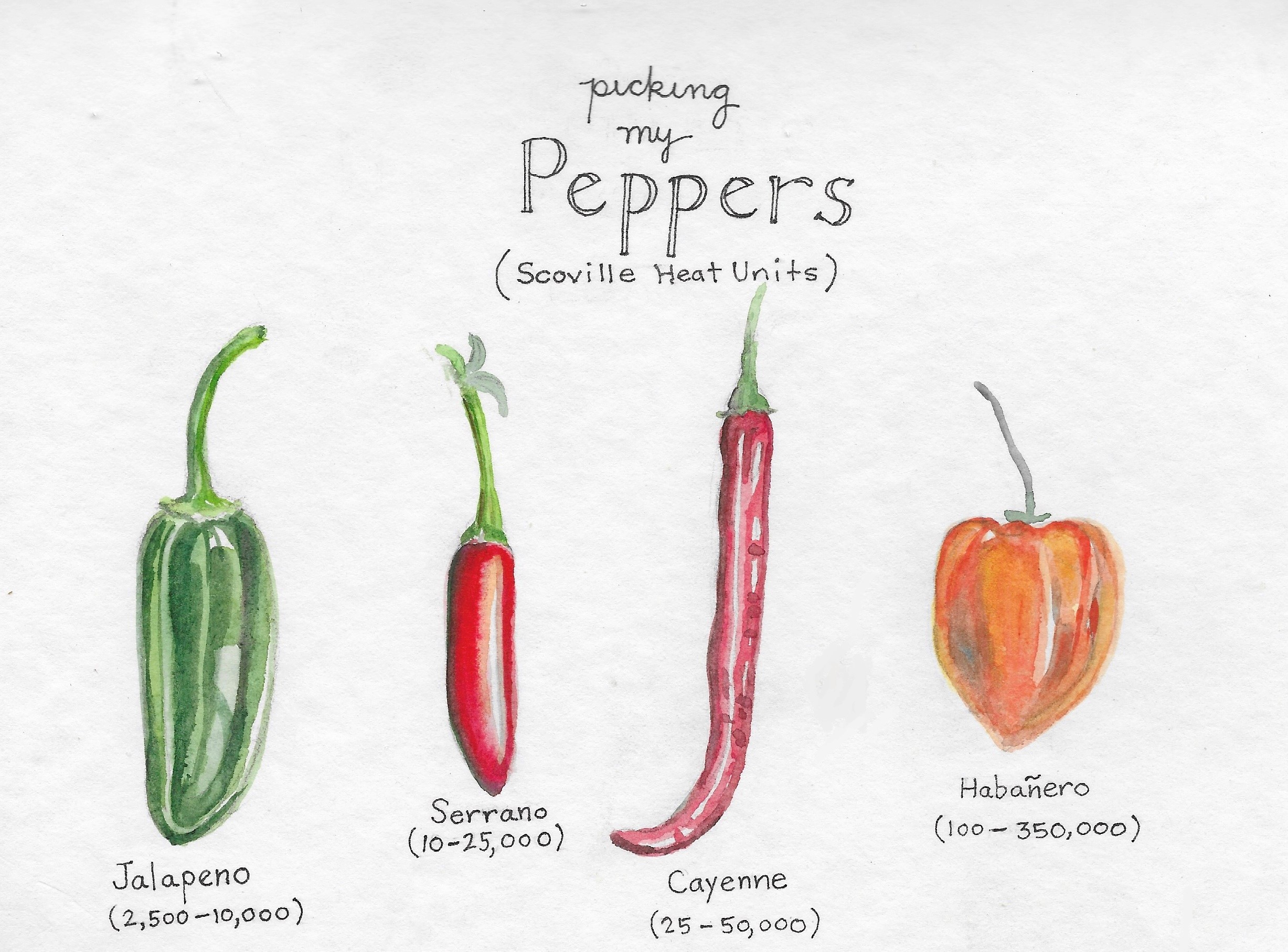 Picking Peppers for the Garden